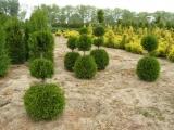 Формированные растения  из грунта.