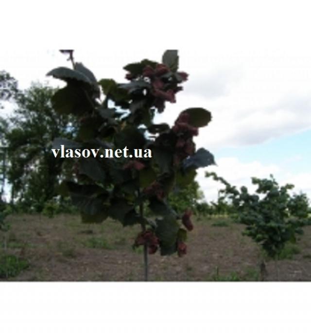 Фундук Варшавский